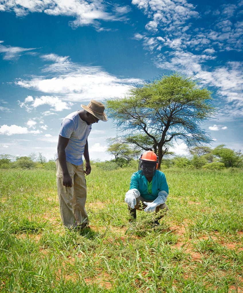 Phillipus and one of his workers inspecting a site that has been thinned. The area was once overgrown and without much grass, but now abundance of grasses have returned.