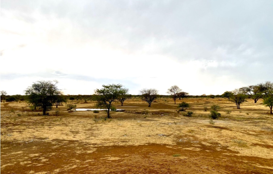 A watering hole in an area where bush control was used on the Otjikoto Nature Reserve.